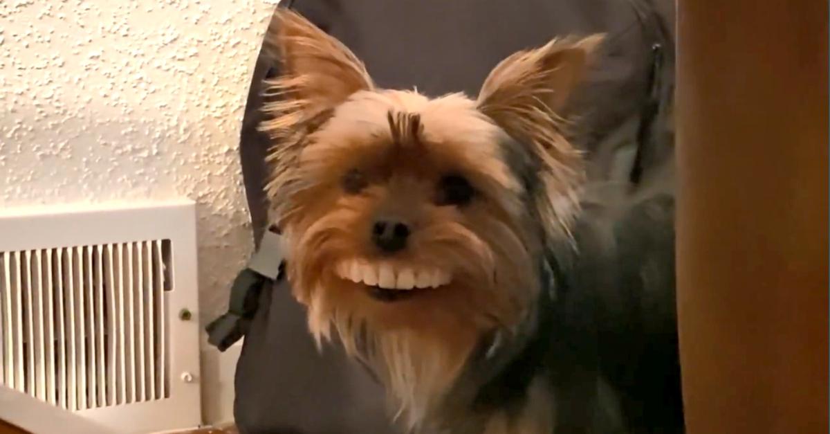 """Ruba la dentiera e scappa con un sorriso smagliante: """"È la mascotte della quarantena"""""""
