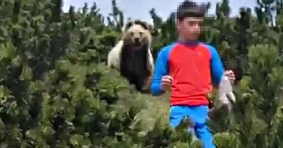 Trentino: l'orso sbuca dai cespugli alle spalle del bimbo. La sua reazione è da manuale