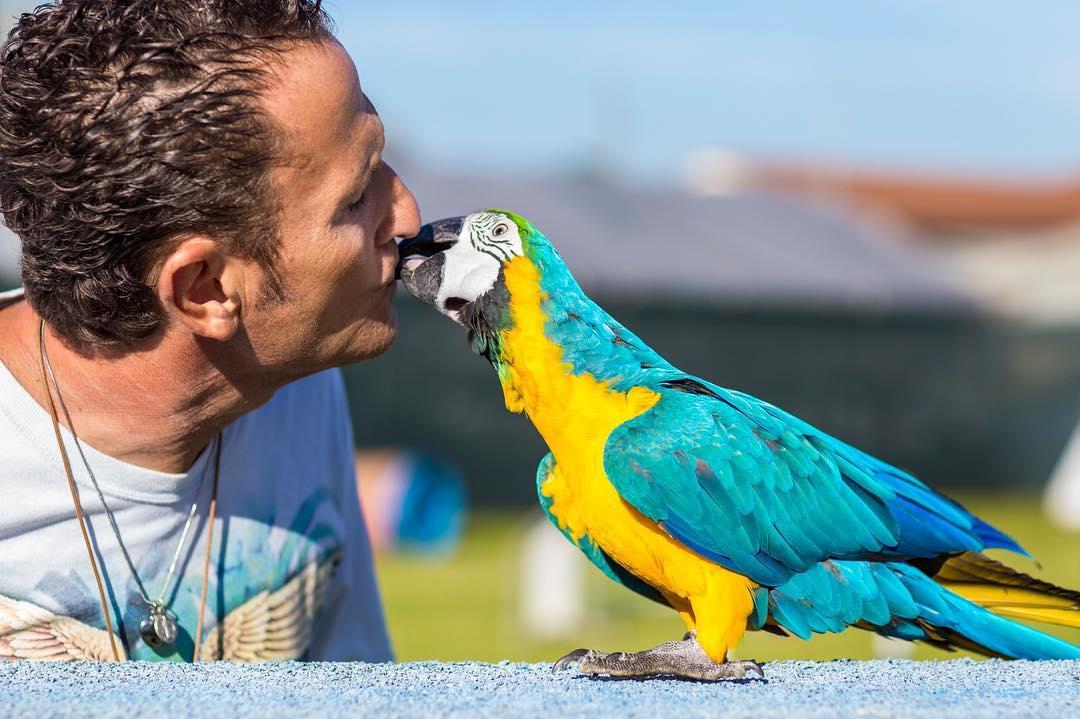 Enzo Salvi picchiato per difendere il suo pappagallo Fly preso a sassate