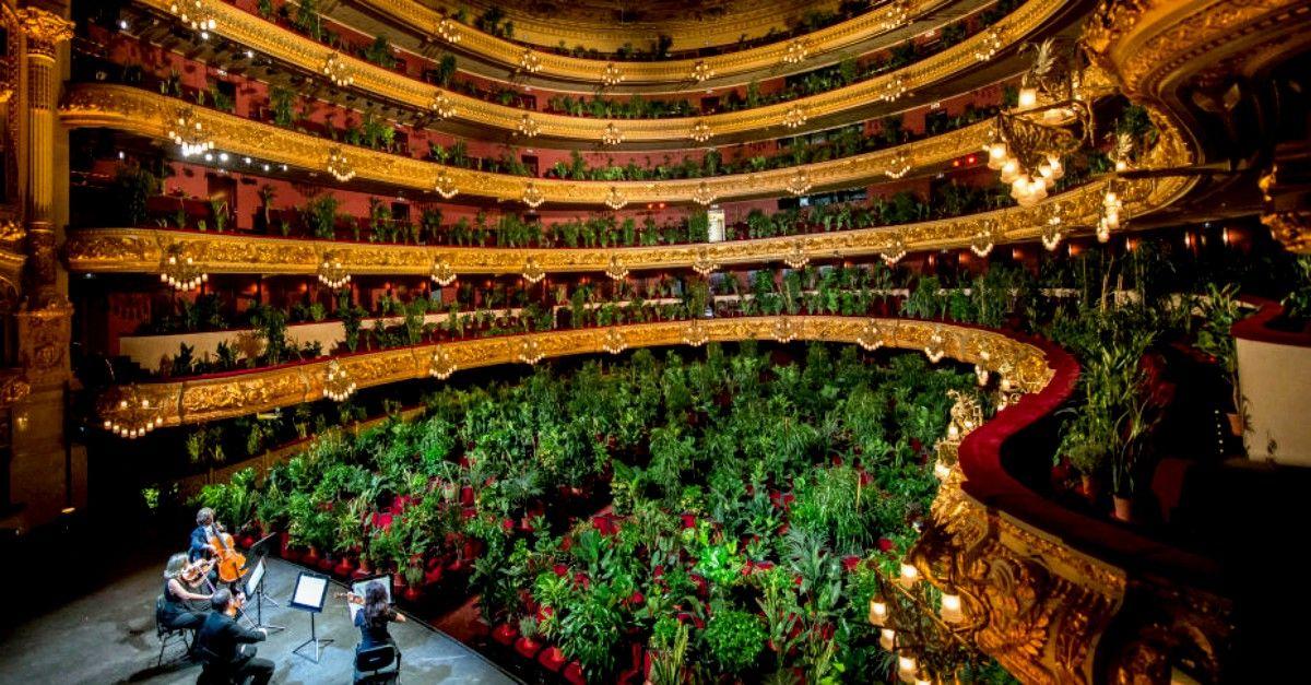 4 archi per 2292 piante: il primo concerto dopo il lockdown è per il regno vegetale