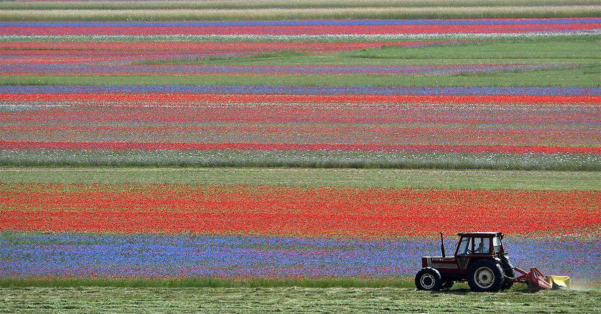 Umbria, l'incanto della fioritura a Castelluccio di Norcia