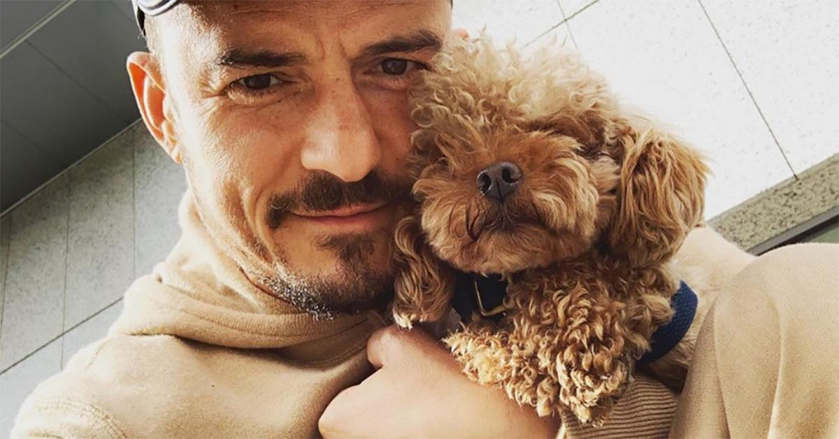 """Orlando Bloom, l'appello per ritrovare il suo cagnolino: """"Ho il cuore spezzato"""""""