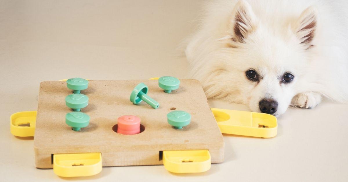 Giochi interattivi per cani e gatti: come testare la furbizia del peloso di casa