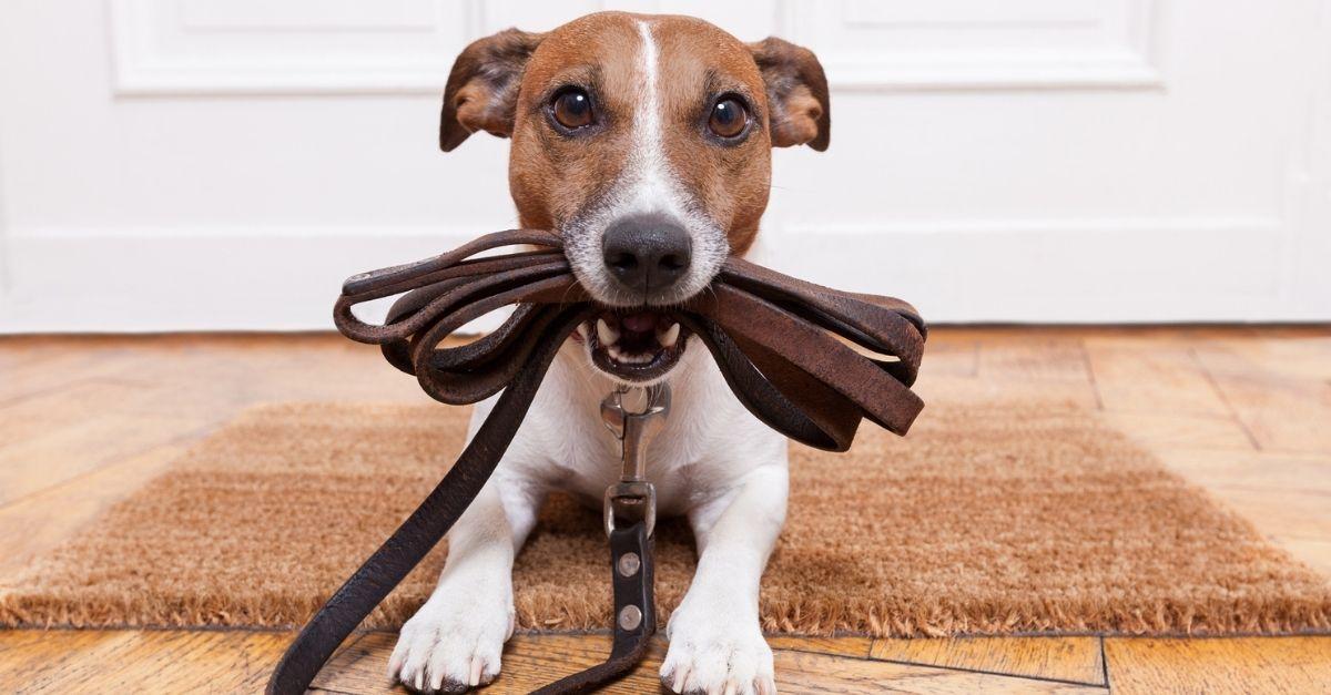 Guinzaglio per cani fisso o estensibile: quale scegliere