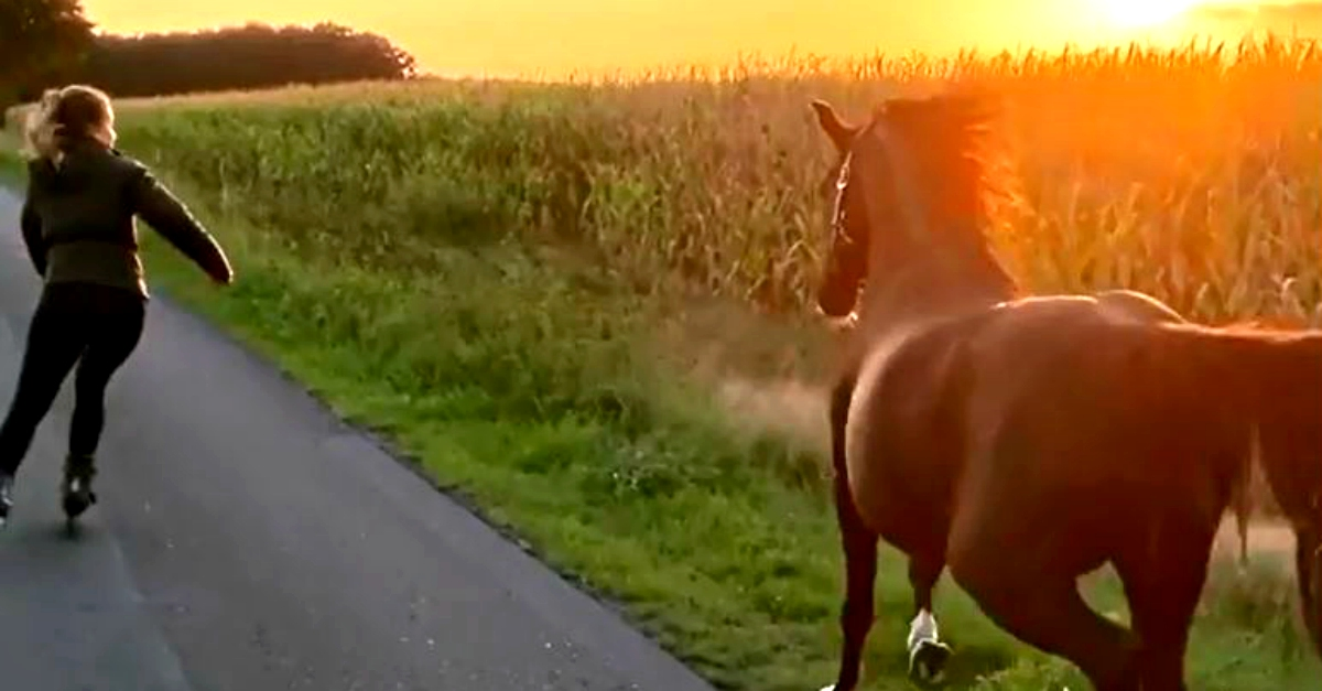 Liberi al tramonto: il cavallo corre accanto alla ragazza sui roller
