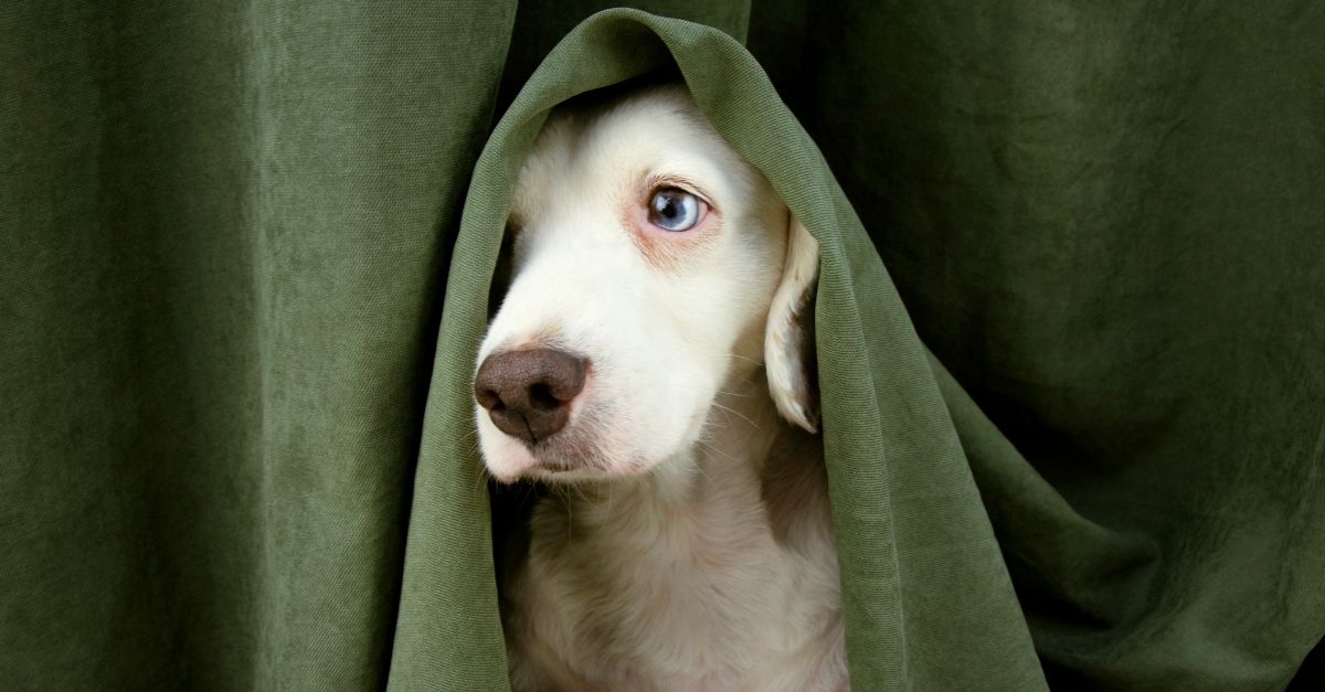 Paura dei temporali: le strategie per aiutare il nostro cane a non andare in crisi