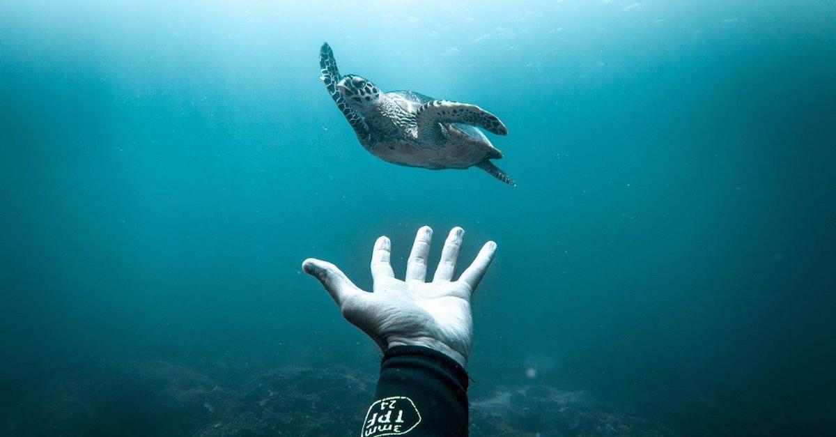Ocean Film Festival Italia, arriva la quarta edizione: 19 date in 17 città