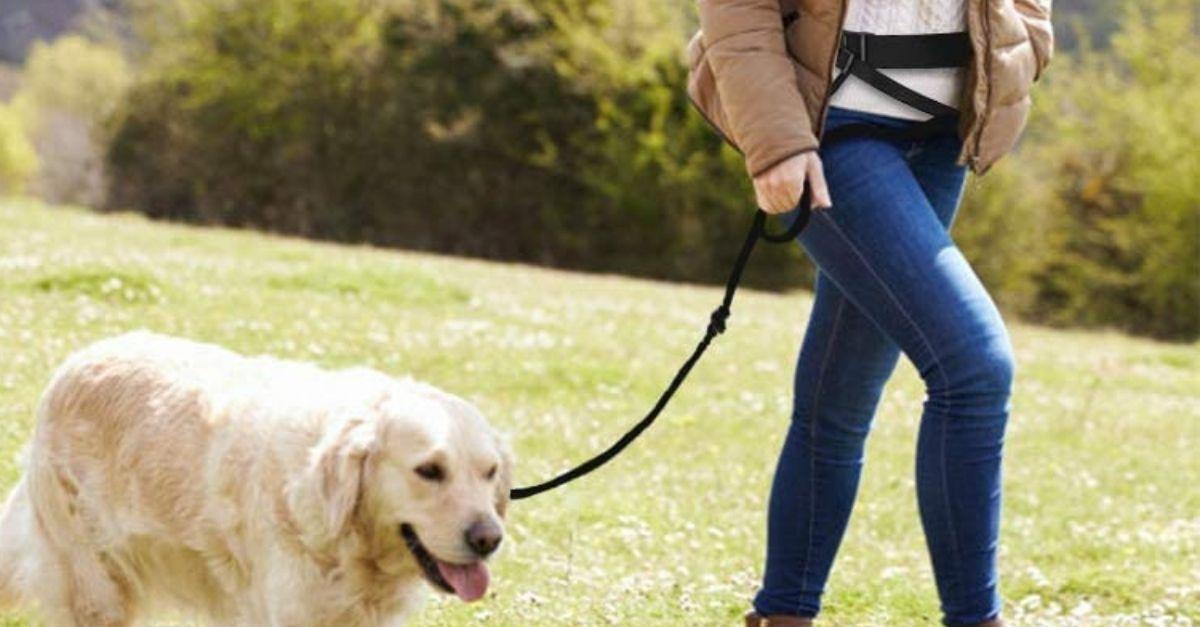 Come portare a spasso il cane a mani libere