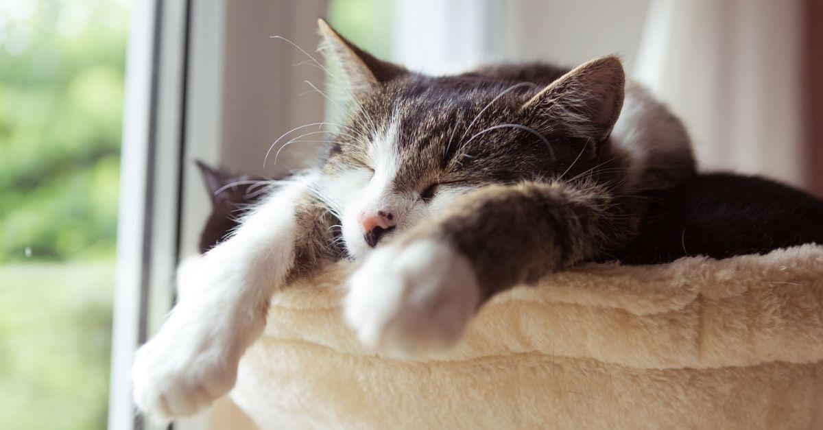 Se ancora non l'avete, è il momento di acquistare un'amaca per il vostro gatto