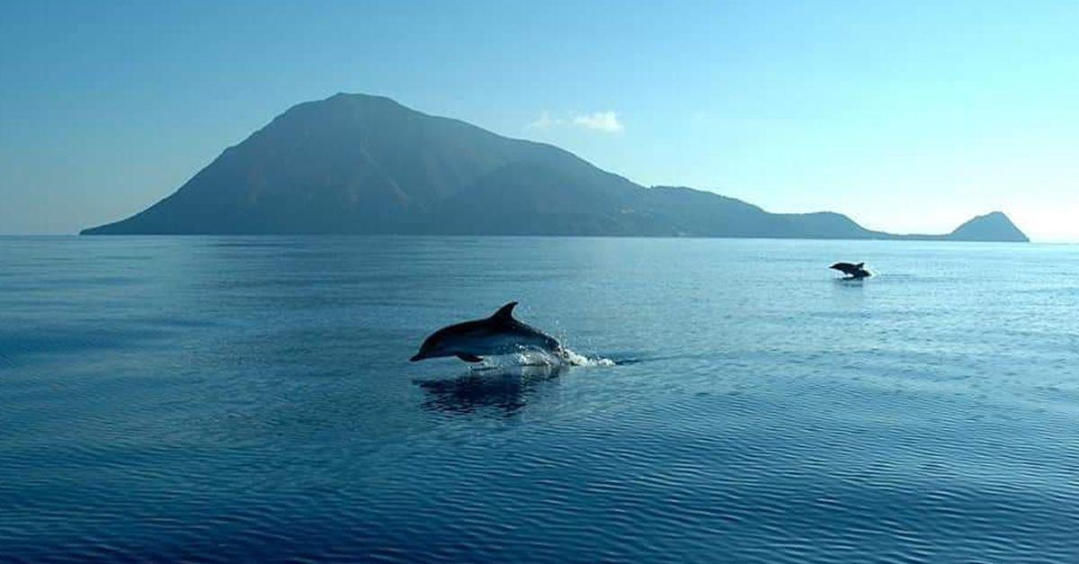 Show alle Eolie, un branco di delfini danza e salta nelle acque di Filicudi
