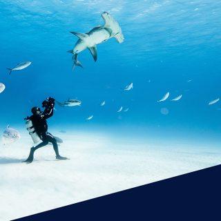 L'Ocean Film Festival torna al cinema: un tuffo nel blu con 9 filmati e 15 tappe per l'Italia