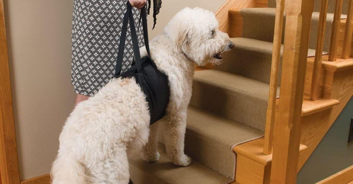 L'imbracatura che aiuta il vostro cane a camminare