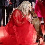 Venezia 78, un cagnolino sul red carpet: Benny ruba la scena alle star