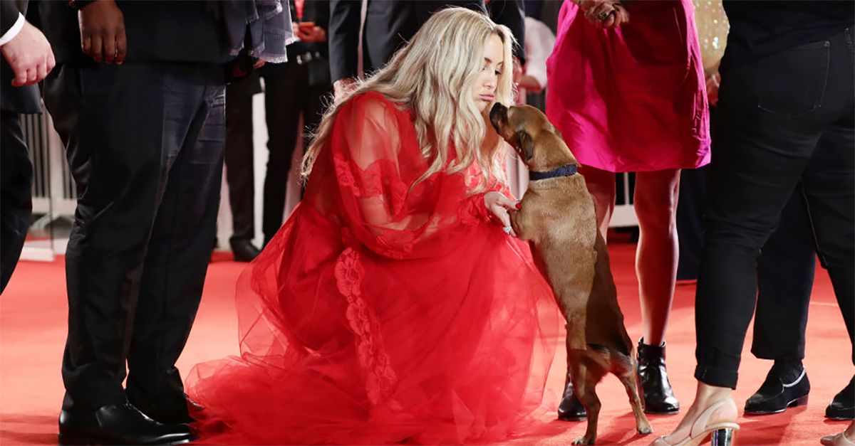 Venezia, un cagnolino sul red carpet: Benny ruba la scena alle star | Radio  Deejay