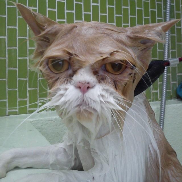 Foto Gatti che odiano fare il bagnetto - Radio Deejay