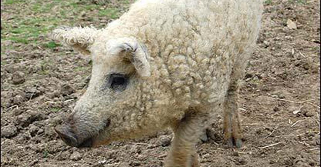 Animali, gli incroci che forse non avete mai visto