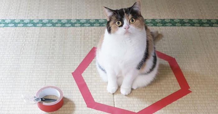 """I gatti impazziscono per i cerchi: tre semplici mosse per """"intrappolarli"""" senza che se ne accorgano"""