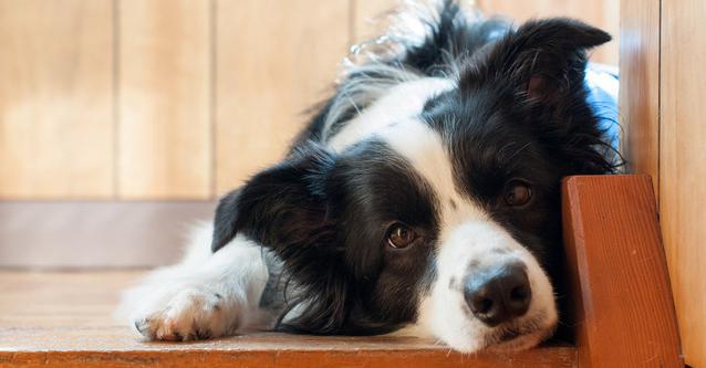 Cosa combina il vostro cane quando lo lasciate solo in casa? Sicuramente vi cerca! Ecco il video