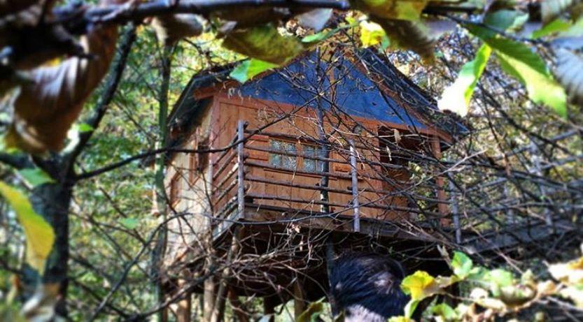 10 case sull 39 albero dove dormire in italia radio deejay