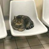 """Il gatto dell'ospedale cacciato dopo 10 anni: """"Deve tornare a fare bene ai pazienti"""""""