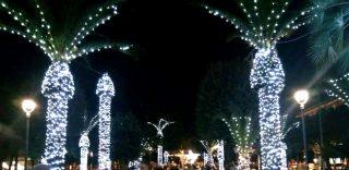Lo strano effetto delle luci di Natale sulle palme di Civitanova Marche