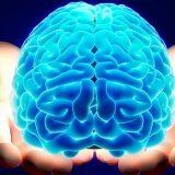 """Il neuroscienziato Andrea Moro: 'Il cervello è quello che la natura ci dà, non cambia"""""""