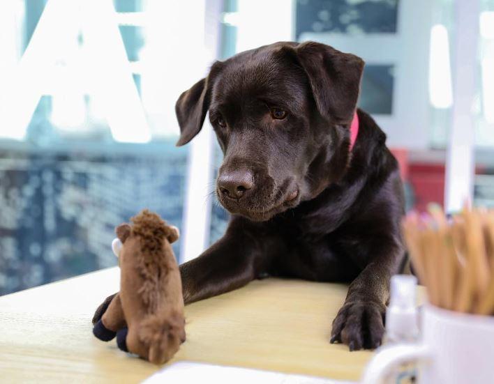 La Prima Pubblicità Di Ilde Il Cane Di Linus Radio Deejay