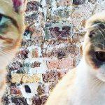 Calippo e Dorito, i gattini di Ed Sheeran sbarcano su Instagram