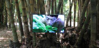 Palermo, sesso con le piante: all'Orto Botanico la video installazione che fa discutere