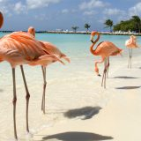 Bahamas, cercasi guardiano di fenicotteri: ecco i sei lavori più belli al mondo