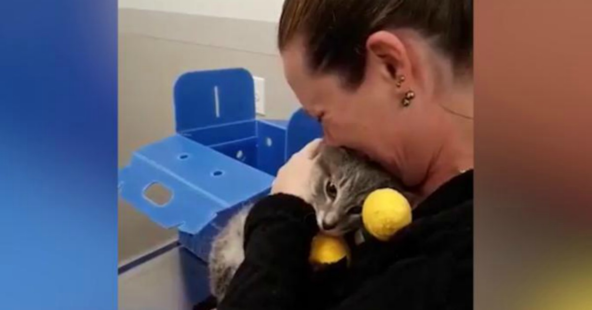 Incendi in California, ritrova il gatto disperso: l'abbraccio è commovente