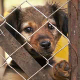 Rimborso spese veterinarie per chi adotta al canile
