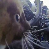 USA, il poliziotto salva il piccolo gattino: il micio lo ringrazia teneramente