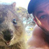 Chris Hemsworth e il selfie con il quokka, l'animale più felice del mondo