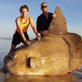 """Australia, trovato un """"Mola mola"""": è il leggendario pesce luna"""