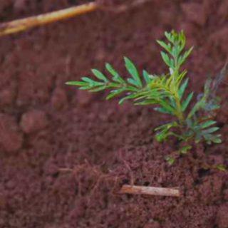 ogni 1000 views, Treedom pianta un albero