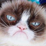 È morta Grumpy Cat, la gatta più famosa e imbronciata del web
