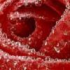 valentina quercivi
