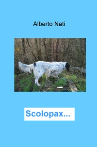 Scolopax