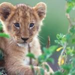 """Telefilm per teenager: dai leoni di """"African Cats"""" alle audizioni per il musical di """"A tutto ritmo"""" - in progress"""