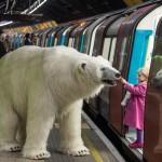 Fortitude, a Londra spunta un orso polare