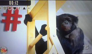 Isola dei Famosi 2017, prima puntata: la scimmia ne batte quattro