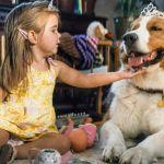 Qua la zampa 2, quando la fedeltà di un cane supera la morte