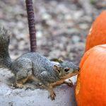 Halloween in tv, una programmazione per grandi e piccini