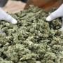 La marijuana in Uruguay sarà monopolio di Stato