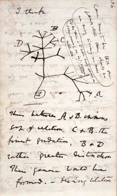L'albero della vita di Darwin.