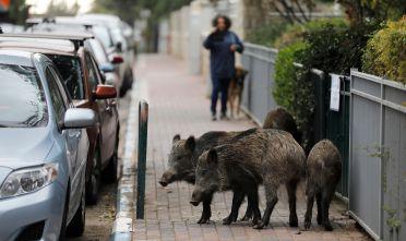Foto di Menahem Kahana/AFP via Getty Images.