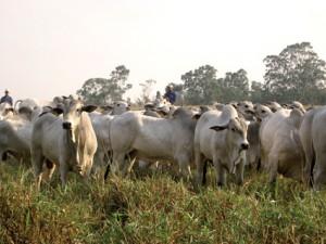 Il Brasile è uno dei più grandi esportatori di carne al mondo