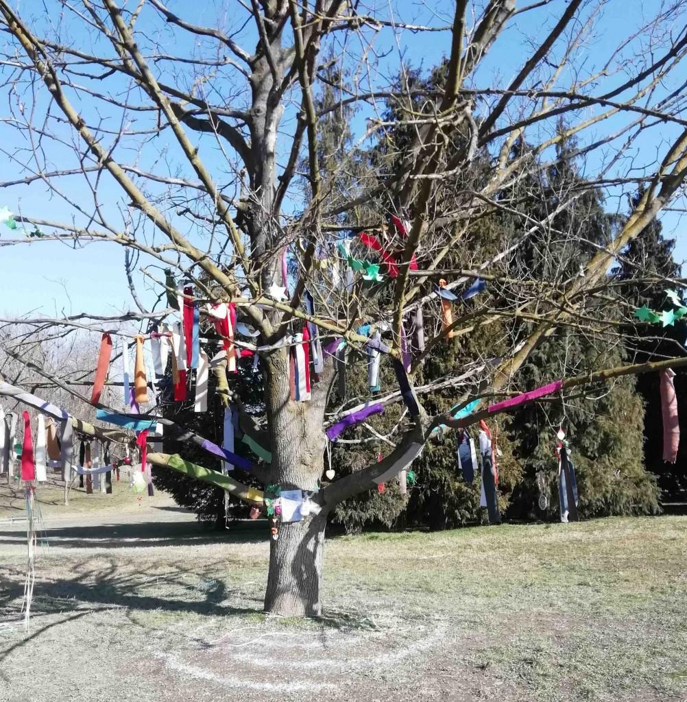 L'albero di Ginevra nel parco della Pellerina a Torino