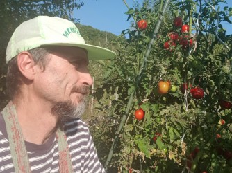 Tiziano con i suoi pomodori. Gli danno più soddisfazione di indici di borsa e computer